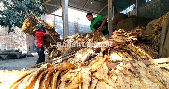 Distanbun Temukan Perusahaan Tembakau Ilegal