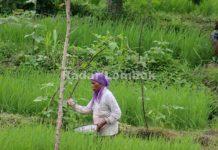 Pengentasan Kemiskinan di Lombok Tengah Belum Merakyat